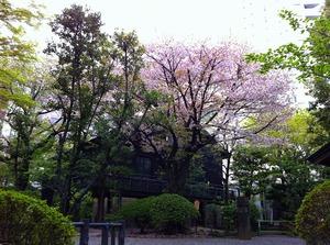 乃木公園2.jpg