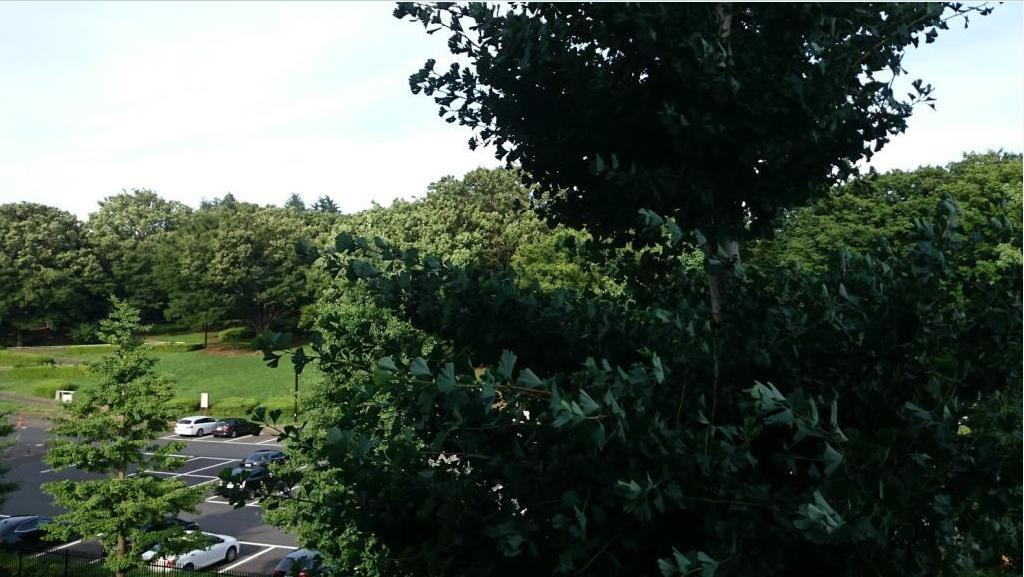 パークサイド代々木公園景色2